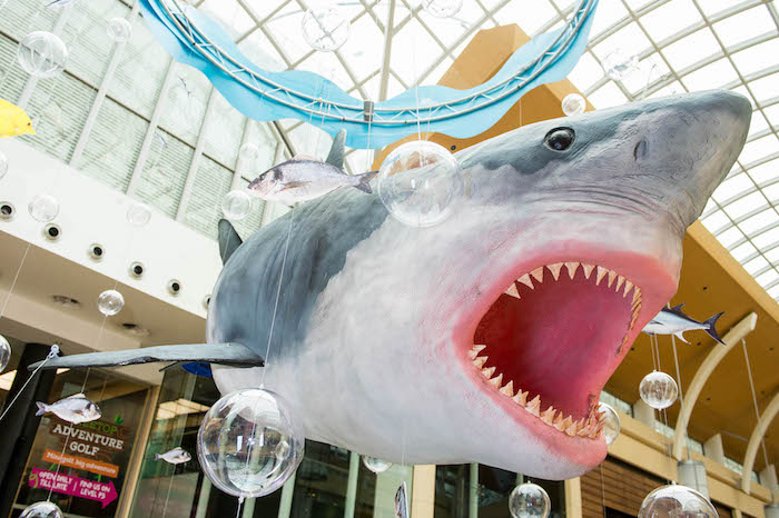 Tuesday 30 July 2019 Something BIG is making a splash at St David's! Say hello to #SharkCDF, our 'Jaws'-dropping Great White Shark measuring nearly 25 feet! This summer, #SharkCDF will offer you the ultimate selfie moment and tons of fin-tastic activities and workshops with local charities for the whole family to help you have your most sustainable summer yet!
